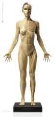 画像1: Anatomy Figure Female Ver.1 アナトミーフィギュア 女性 (1)