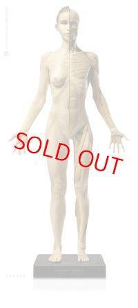 Anatomy Figure Female Ver.1 アナトミーフィギュア 女性