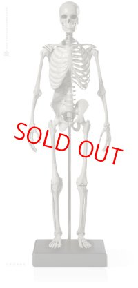 Male 1:6 Skeleton fig v.2 アナトミーフィギュア 男性