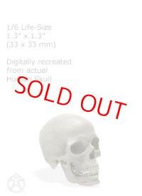 Male skull 1/6: v1 男性スカル