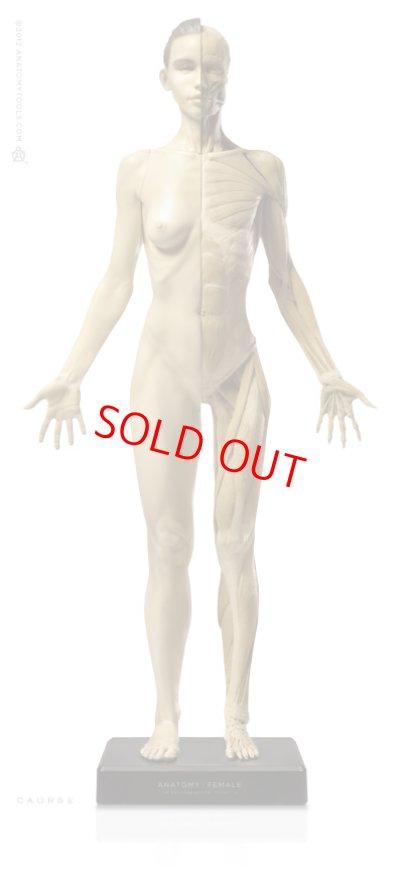 画像1: Anatomy Figure Female Ver.1 アナトミーフィギュア 女性