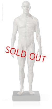 Male 1:6 Flesh/Anatomy fig v.2 アナトミーフィギュア 男性