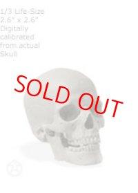 Male skull: Art-pro v2A 男性スカル