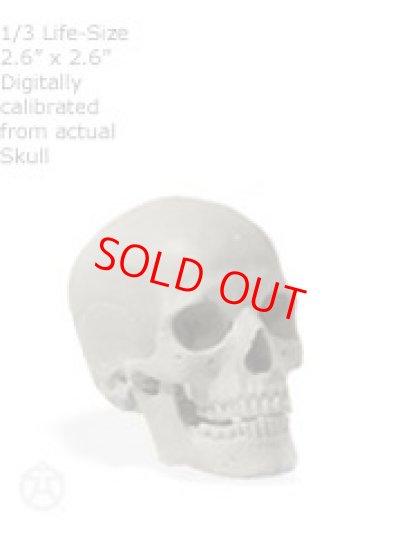 画像1: Male skull: Art-pro v2A 男性スカル