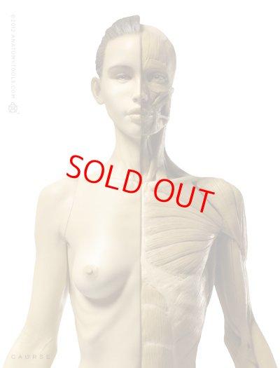 画像2: Anatomy Figure Female Ver.1 アナトミーフィギュア 女性