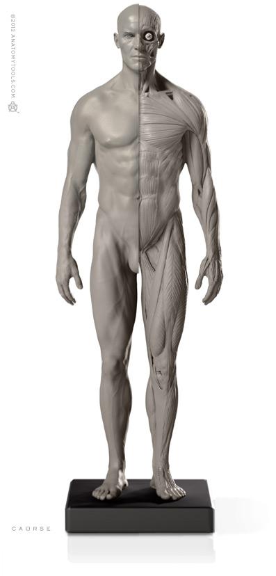 画像1: Male 1:6 Flesh/Anatomy fig v.2 アナトミーフィギュア 男性