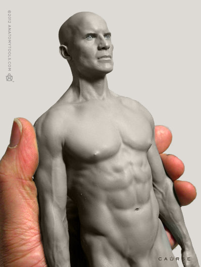 画像3: Male 1:6 Proportional fig v.2- proportion & surface form アナトミーフィギュア 男性